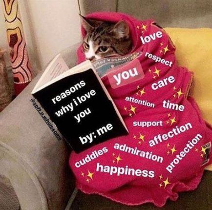 28 Super Ideas For Memes Wholesome Love
