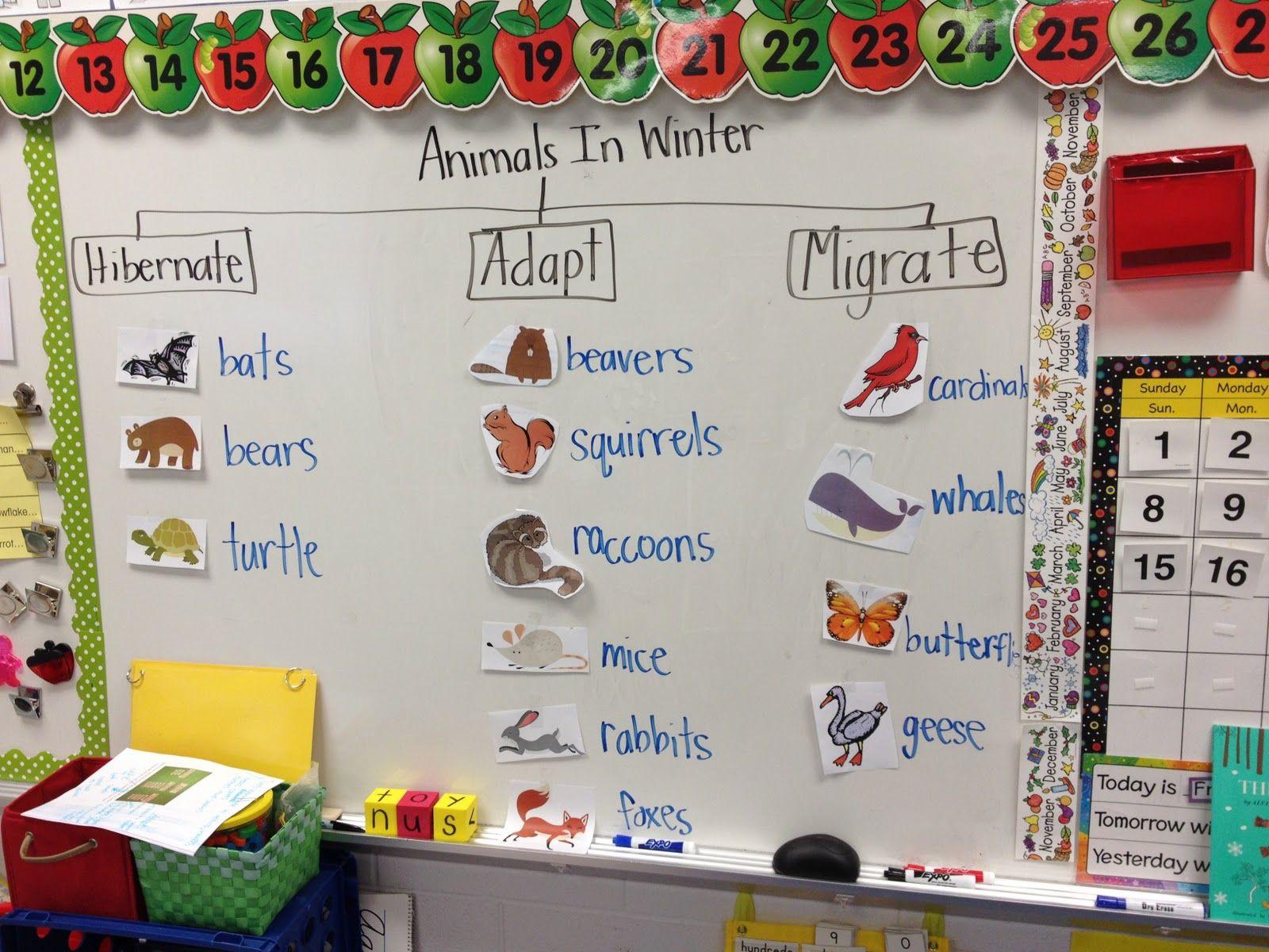math worksheet : 1000 images about hibernation unit on pinterest  animals  : Hibernation Worksheets Kindergarten
