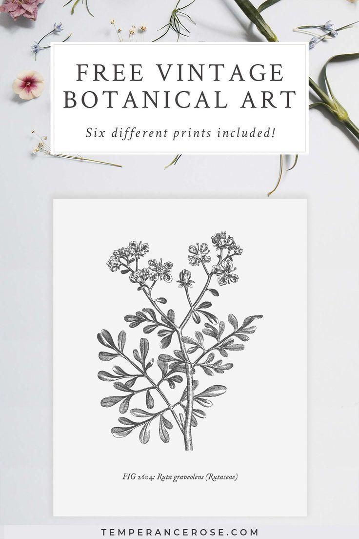 Photo of Free #printable #vintage #botanical #wall #art. #These