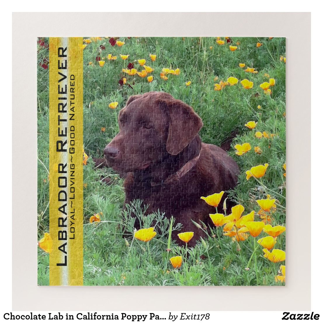 Chocolate Lab in California Poppy Patch puzzles