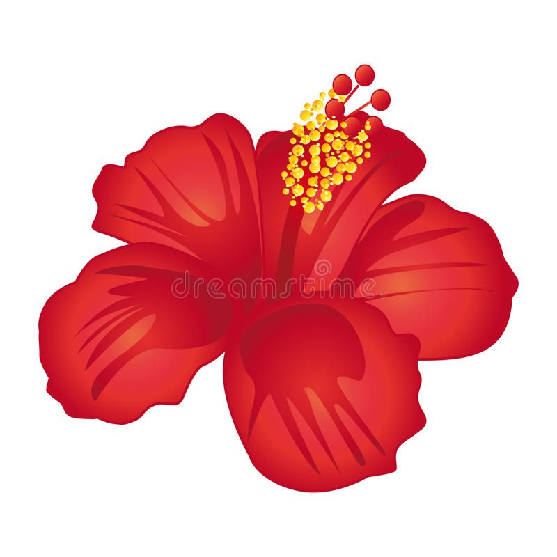 Beautiful Red Hibiscus Flower Beautiful Red Hibiscus Flower Isolated On White B Sponsored Hibiscus Red Beautiful Hibiscus Flowers Hibiscus Flowers