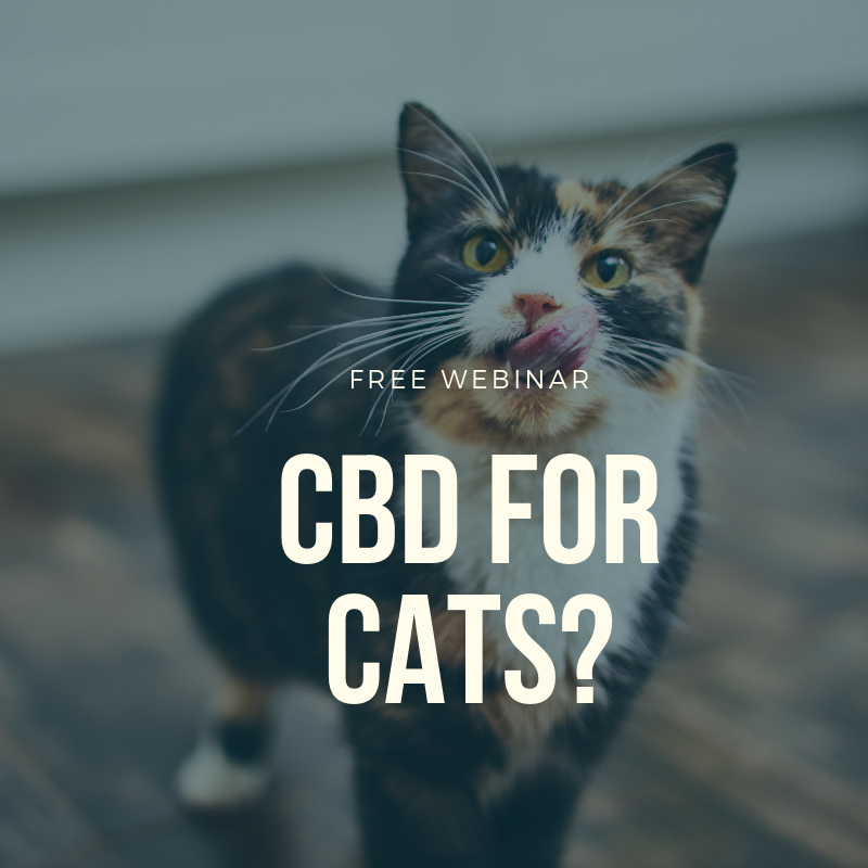 CBD for Cats? Natural cat, Oils for dogs, Dog cat