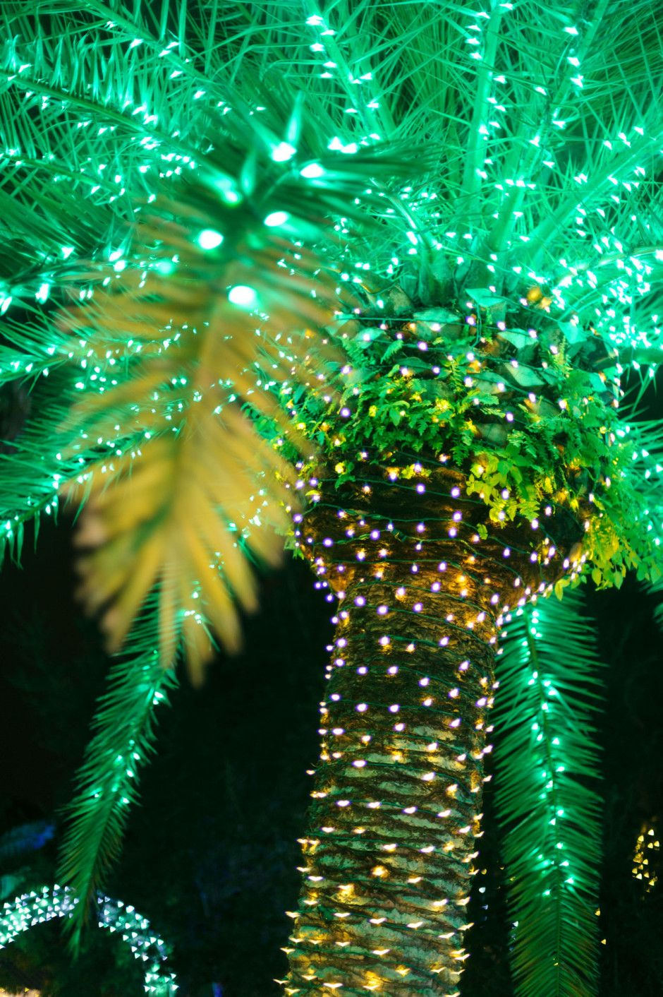8 Reasons You Should Be Spending The Holidays On The Beaches Of Fort Myers Sanibel Christmas Tree Lighting Christmas Tree Photography Outdoor Christmas Tree