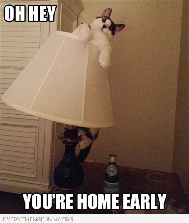 funny cat caption picture oh hi youre home early cat stuck in lamp ...