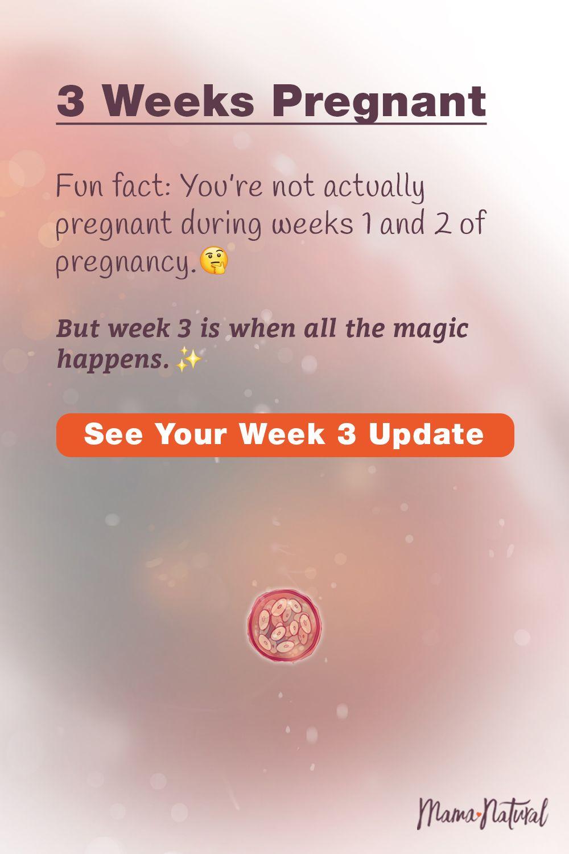 03 Weeks Pregnant   Natural Pregnancy Week by Week   3 weeks