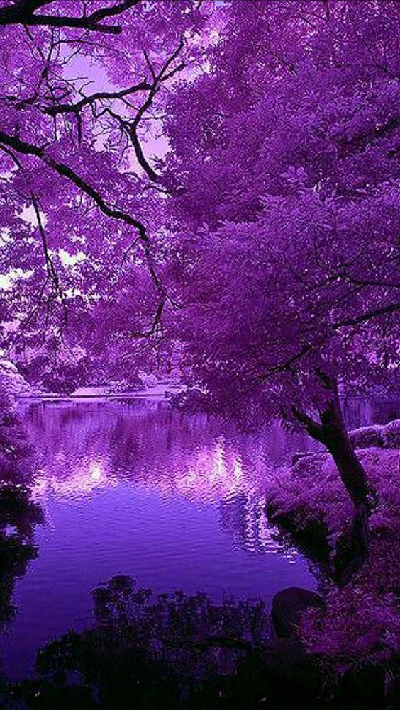 Download Free Android Wallpaper Purple Tree