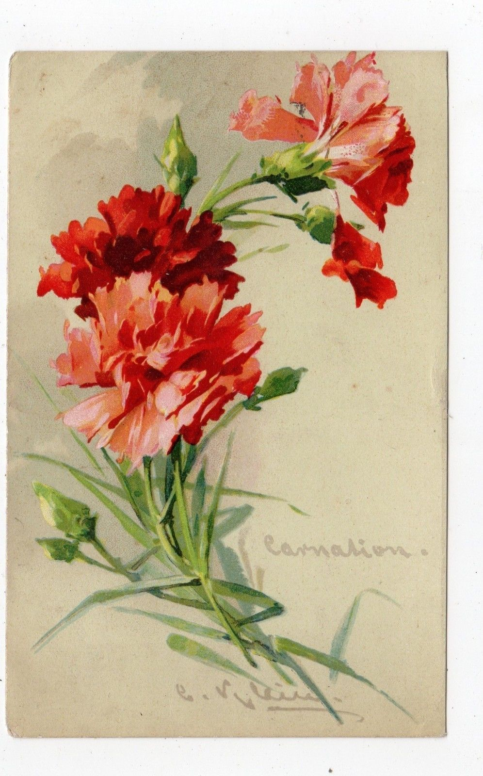 Carnation Flower Postcard By C Klein Jh2056 Flower Drawing Watercolor Flowers Tutorial Flower Painting