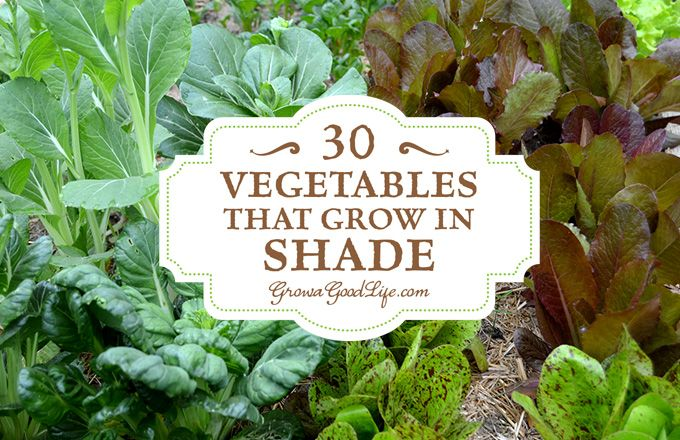 30 Vegetables That Grow In Shade Growing Vegetables 400 x 300