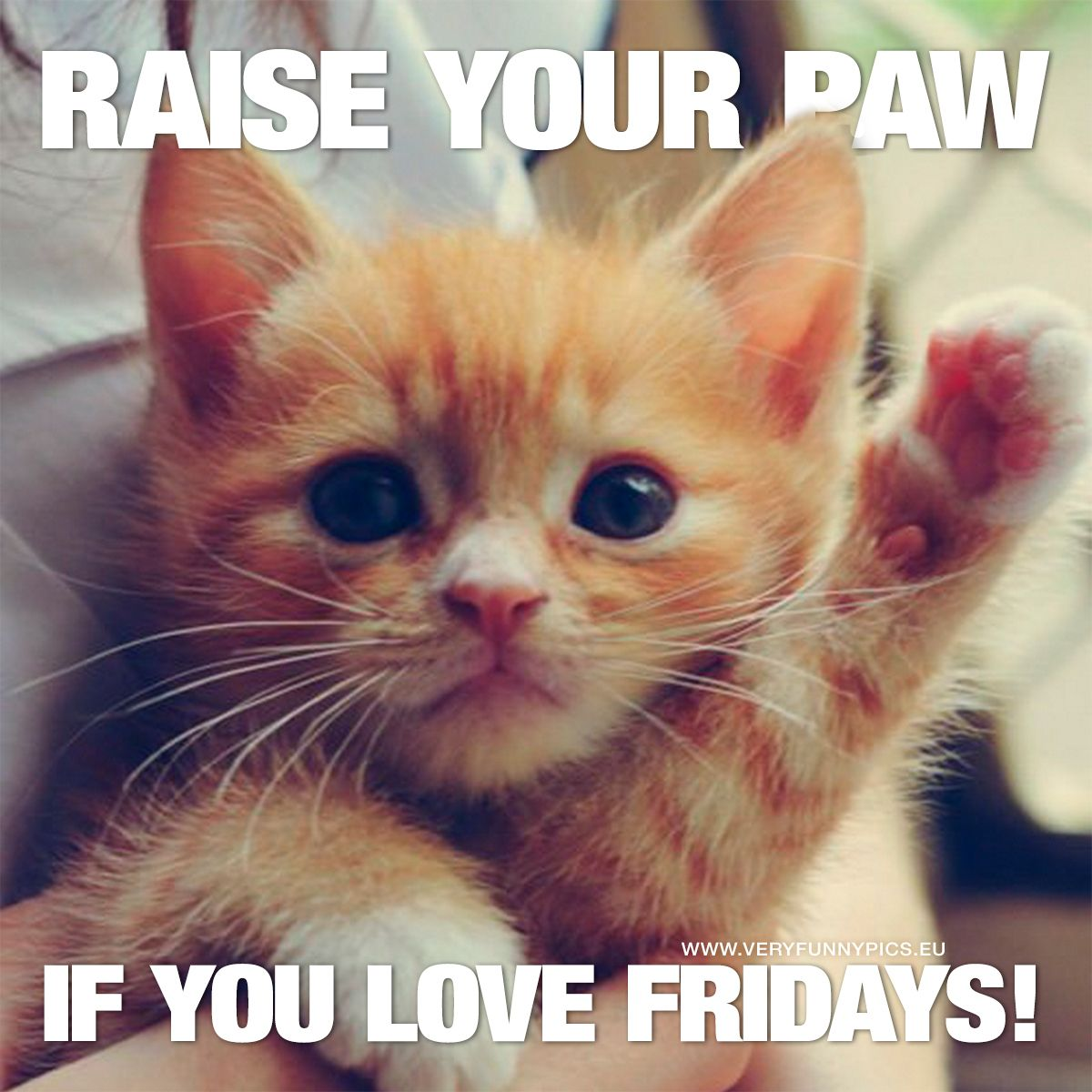 Welcome Wonderful Friday Very Funny Pics Happy Memes Funny Friday Memes Its Friday Quotes