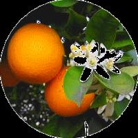 FLORIS Aromaterapia Terapeútica: 5 aceites esenciales para 5 emociones