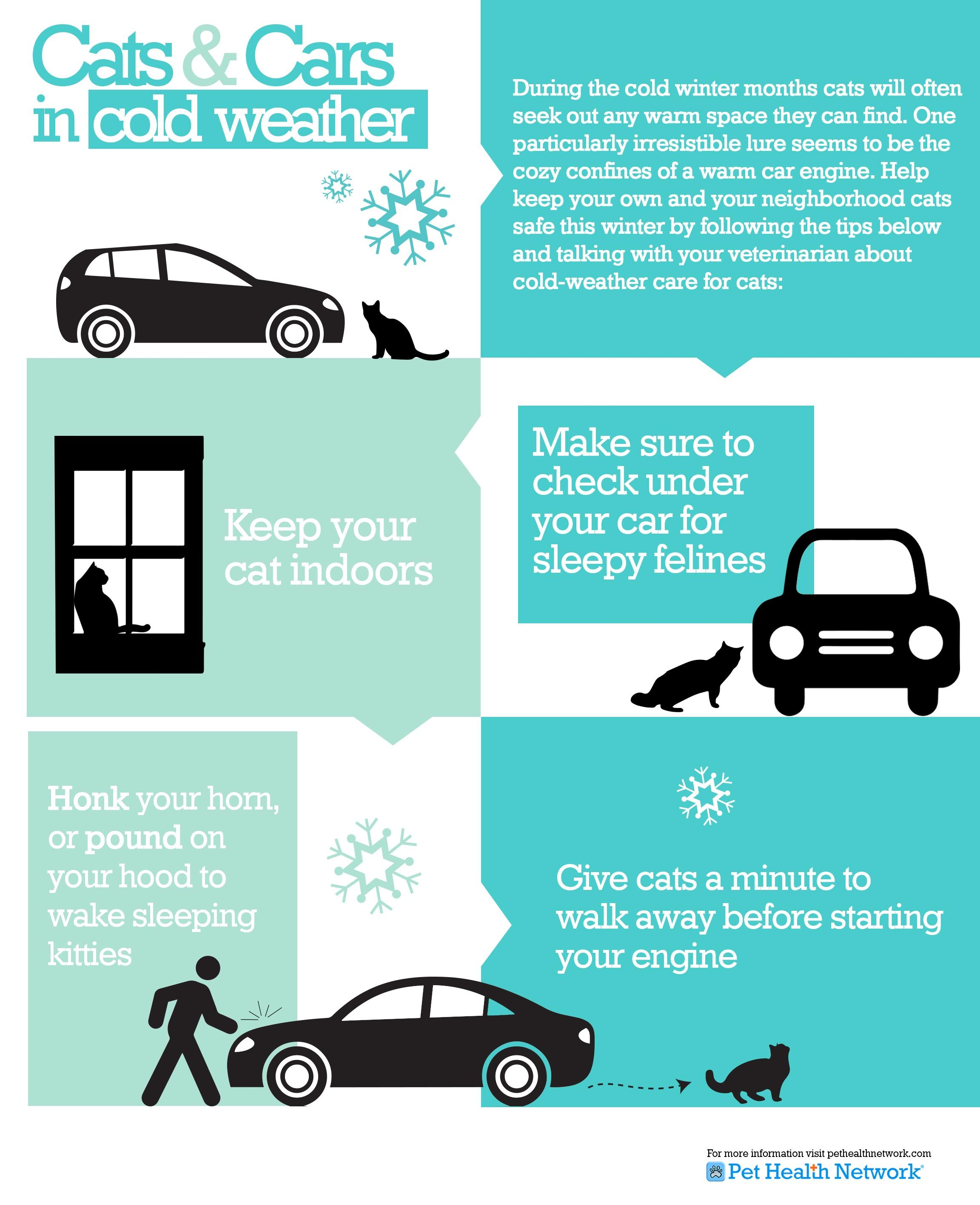 Cats And Cars In Cold Weather Pet Safety Cat Safety Cats