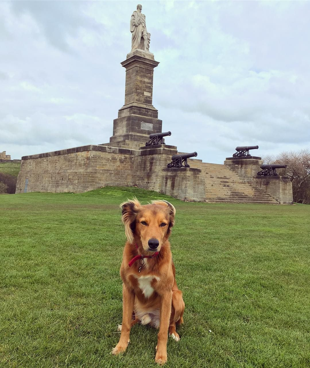 Taking territory protection to the next level in Tynemouth #dog explore Pinterest