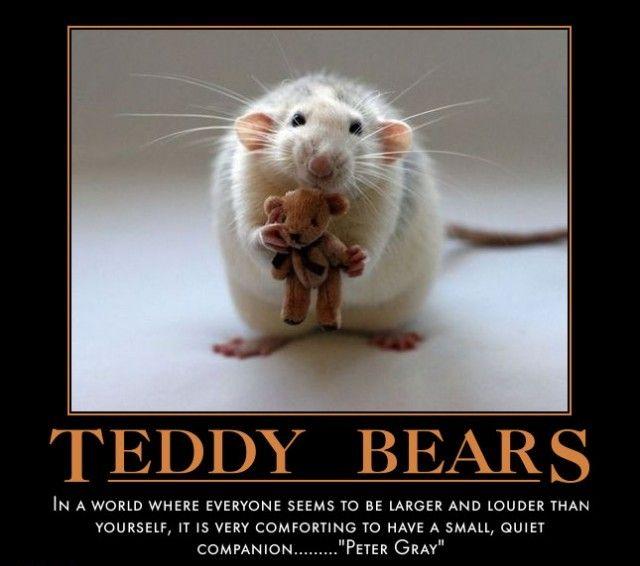 Bear Meme Teddy Bear Memes 2 Teddy Bear Hug Teddy Bear