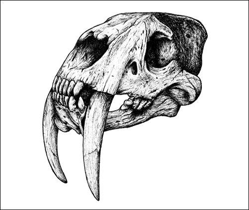Tusk Til Dawn Tattoo Designs In 2019 Skeleton Tattoos