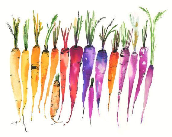 Heirloom Carrots In 2020 Carrot Drawing Painting Artwork