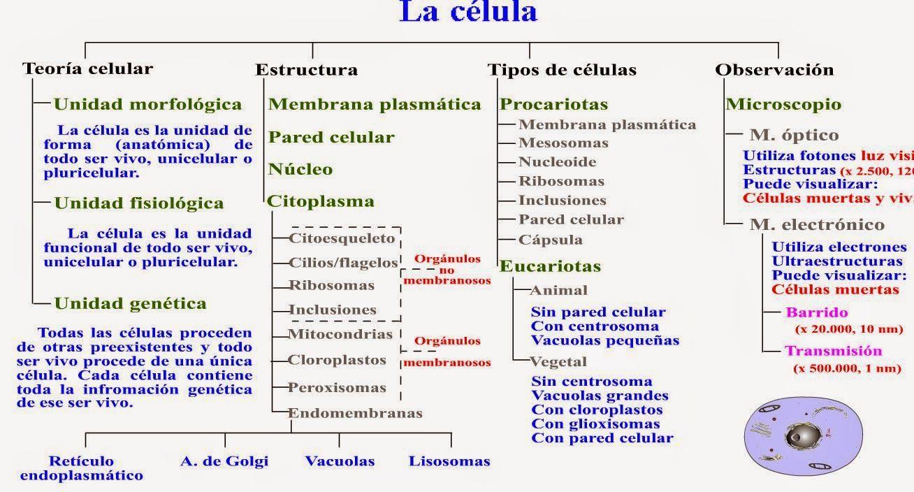 Resultado De Imagen Para Las Celulas Y Su Funcion Teoría