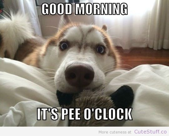 Good Morning Too In German : How every dog greets their owner in the morning cute
