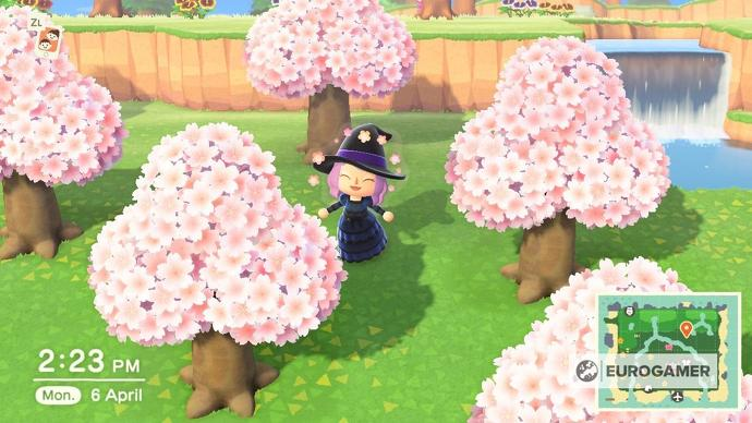 Animal Crossing Cherry Blossoms How To Find Cherry Blossom Furniture Recipes And Catch Cherry Blos Cherry Blossom Petals Cherry Blossom Season Animal Crossing