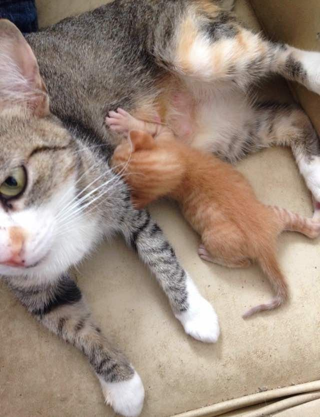 Orphaned Kitten Found Crying for His Mom, So They Got Him