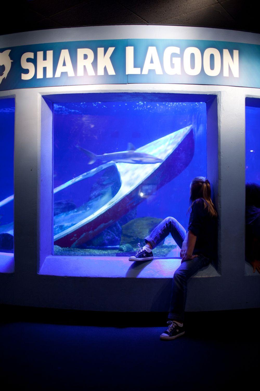 Sharks lagoon ебут спящую