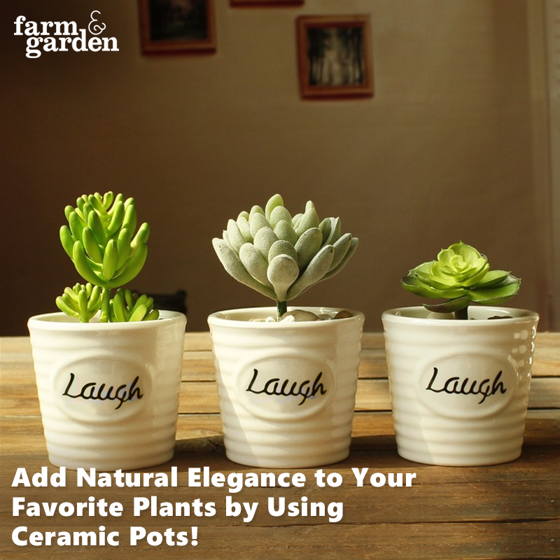 Add Natural Elegance To Your Favorite Plants Showing Them Off Stunning Effect