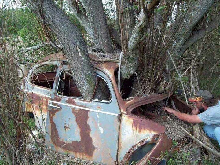 Grow On Trees Cars Vs Trees Abandoned Cars Vw Cars