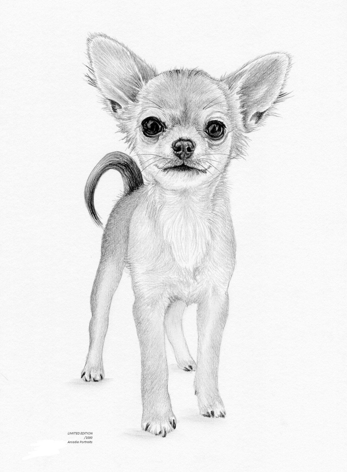 Chihuahua Puppy Dog Limited Edition Art Drawing Print Signed By Uk