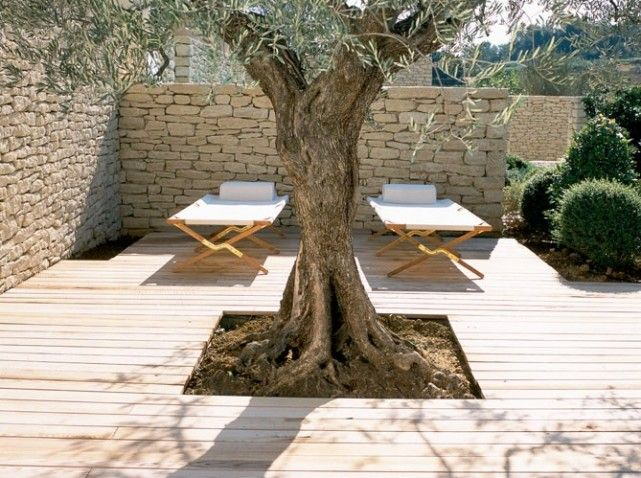 olivier terrasse jardin pinterest terrasses le jardin et jardins. Black Bedroom Furniture Sets. Home Design Ideas