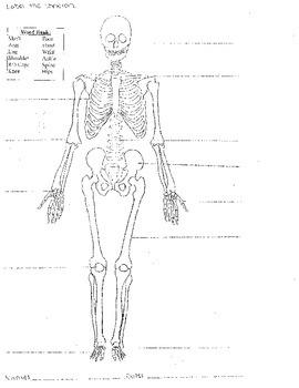 Skeletal System Worksheet 8.5x11 (Label Bones of the