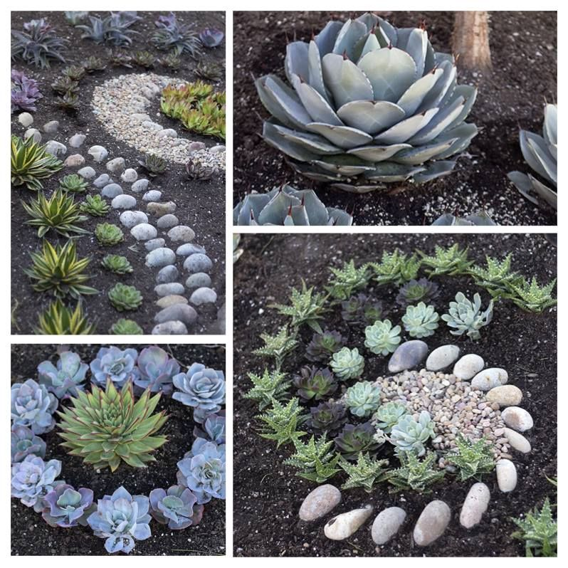 Get creative with your succulents! Design your front yard with these ...