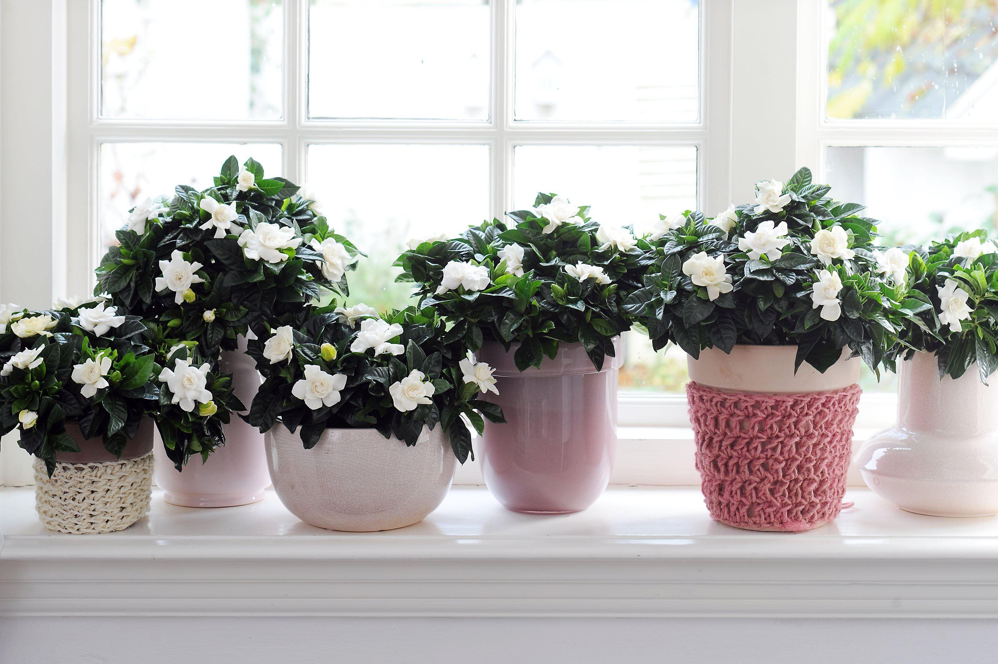 цветы на окне в 2020 г   Комнатные растения, Комнатные ...