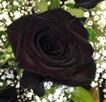 Pin by lexi przypadlo on roses pinterest flowers delivered black rose 12 flowers roses perth flowers delivered perth florist delivering flowers across perth and western australia mightylinksfo Gallery