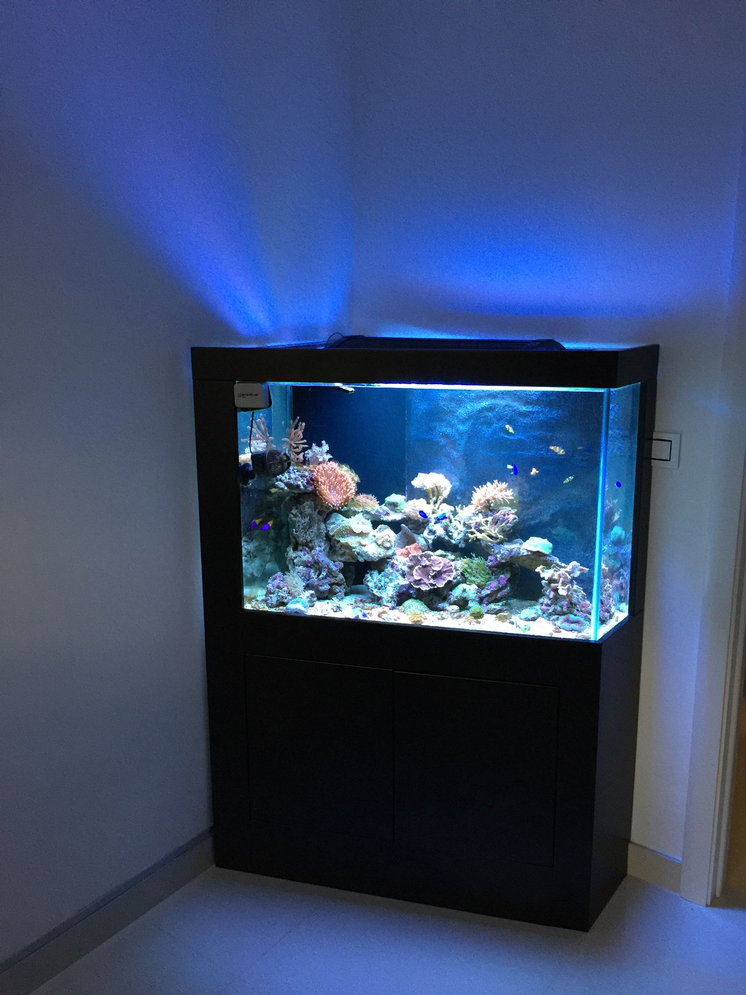Check out this great custom build from baby tuna on Nano Reef They