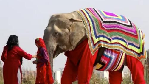 Photo of Villagers Are Knitting Giant Sweaters For Elephants To Protect Them From Near-Freezing Temperatures