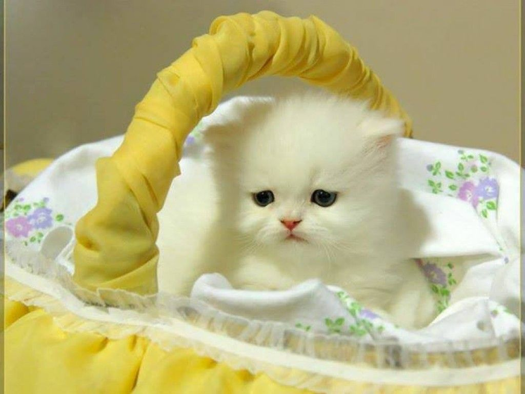 Very Cute Baby Cats Mellow YELLOW Pinterest