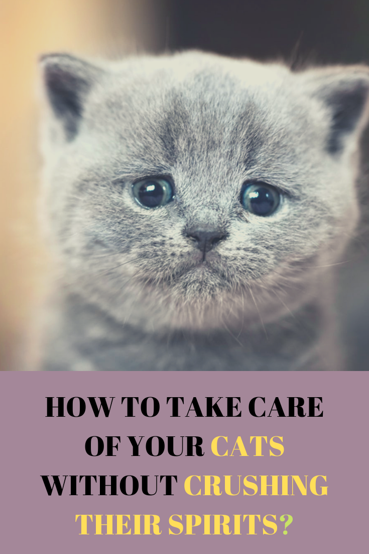 How To Take Care Of Your Cats Without Crushing Their Spirits Cats Pet Wellness Cat Spirit