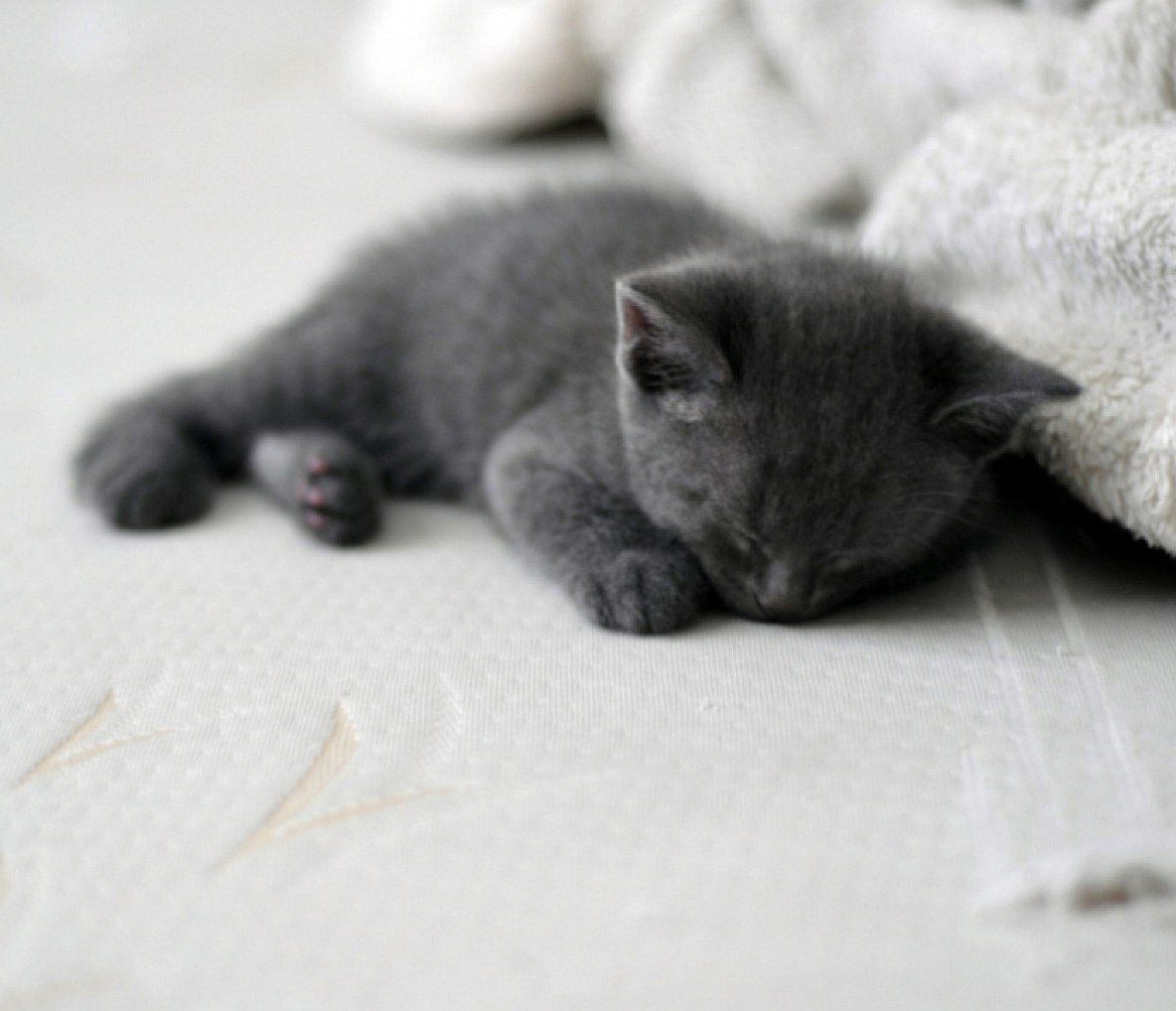 фото спящих серых котят неподалеку