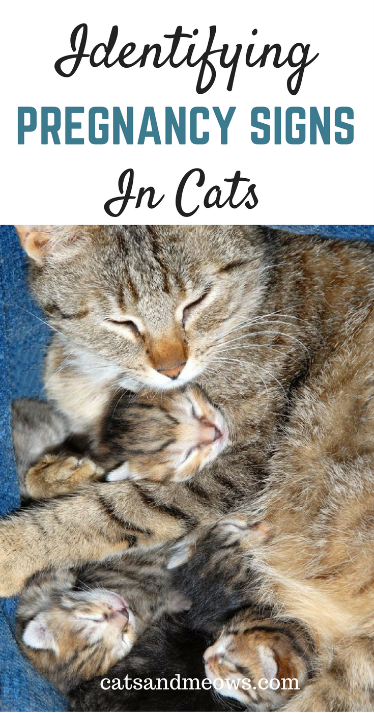 Watch How to Spot the Signs of Cat Abuse video