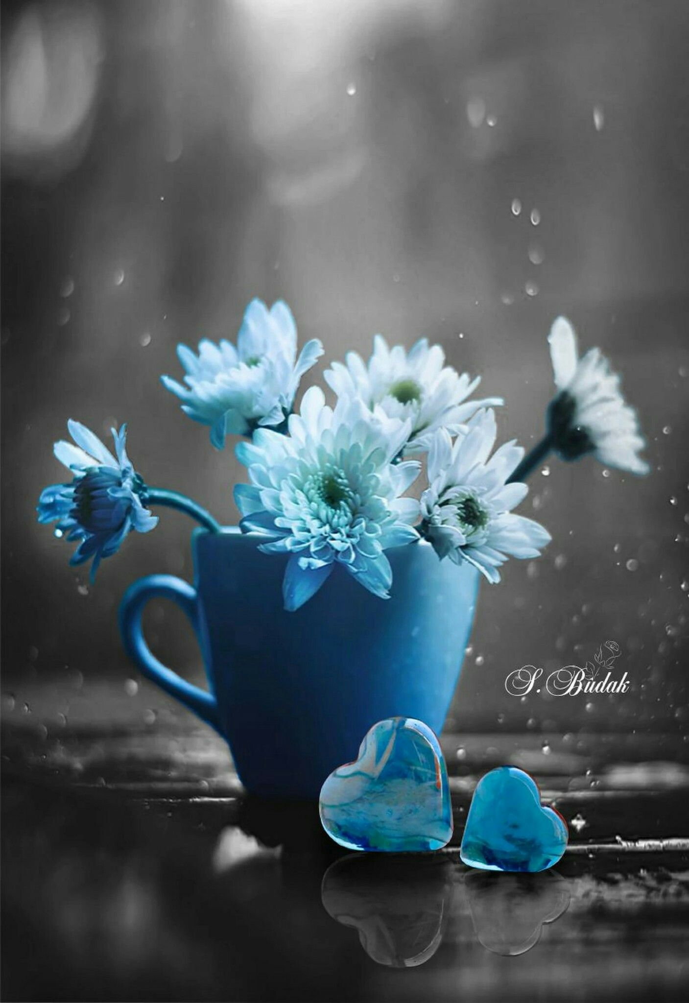 Aesthetic Blue And White Flowers