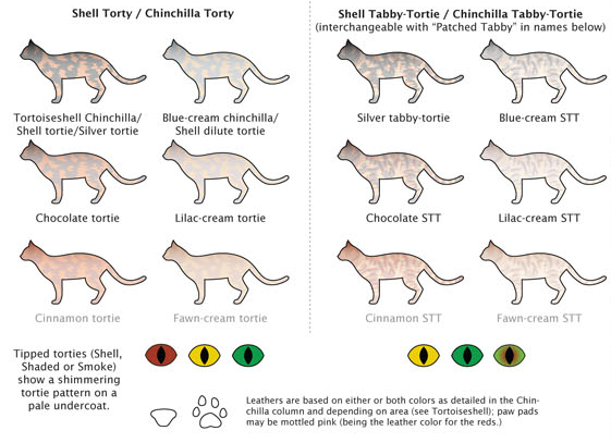 Cat Colors Chart Google Search Cat Colors Cats Musical Feline