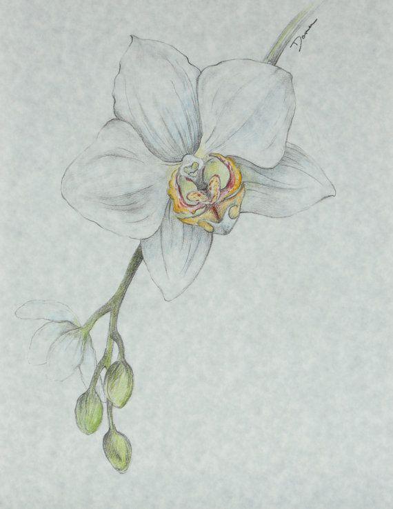 Orchid Flower Drawing Floral Illustration Akrilik Boyama