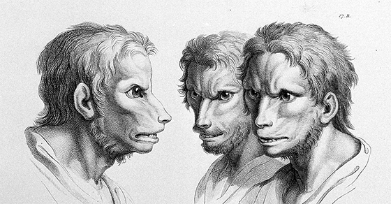What Would Humans Look Like If They Evolved From Different Animals