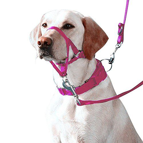 Eastop Dog Head Halter Combination 4 Parts Dog Head Collar Dog