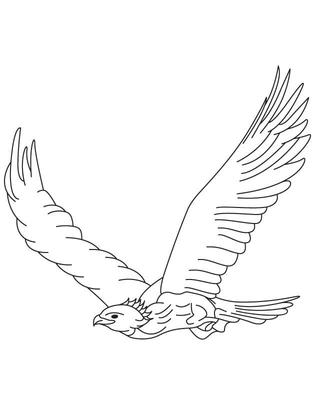 Line Drawing Eagle : Golden eagles colouring pages pinterest