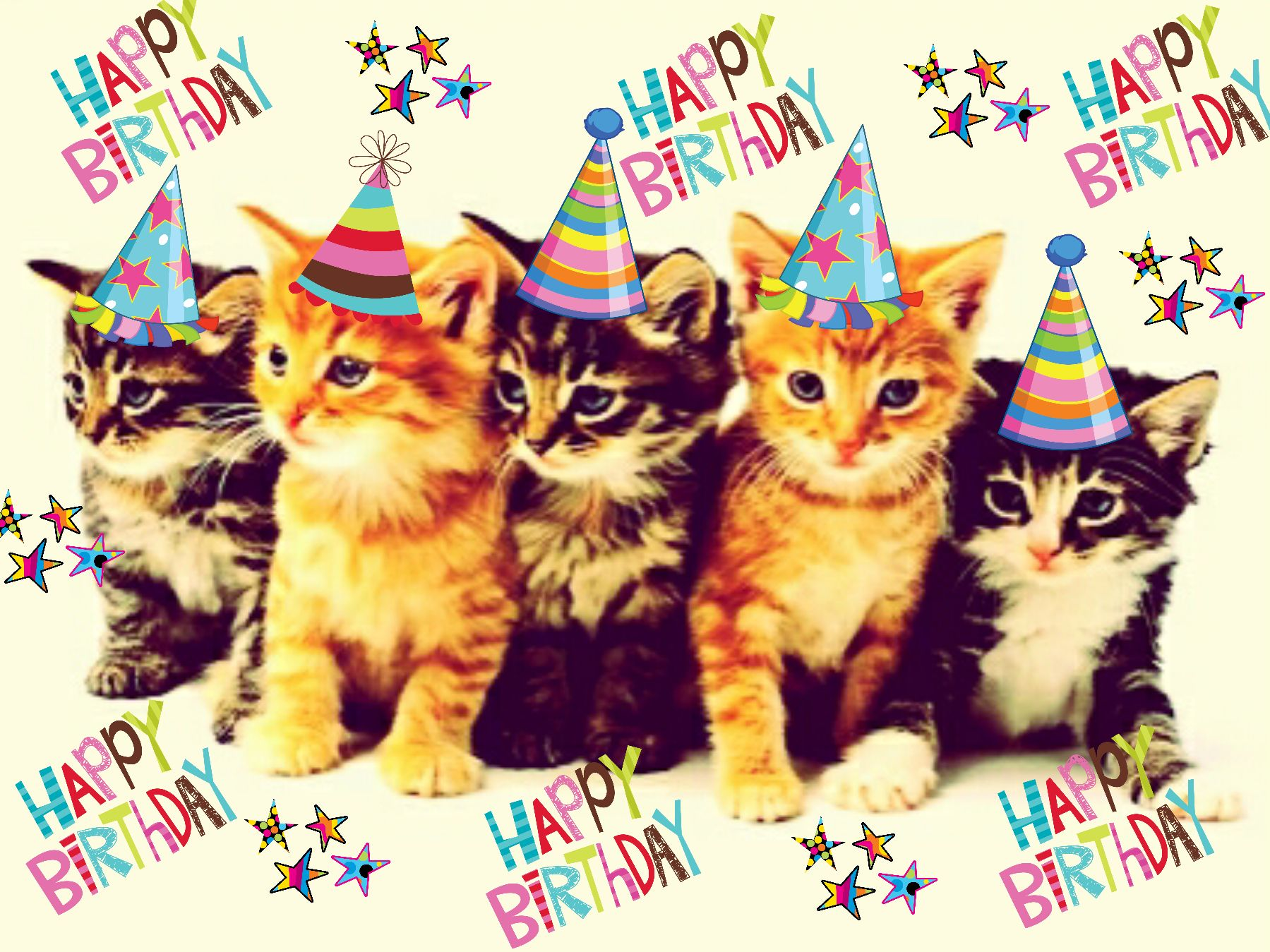 Birthday Wishes, Happy Birthday, Birthday Display, Happy B Day, Cats,