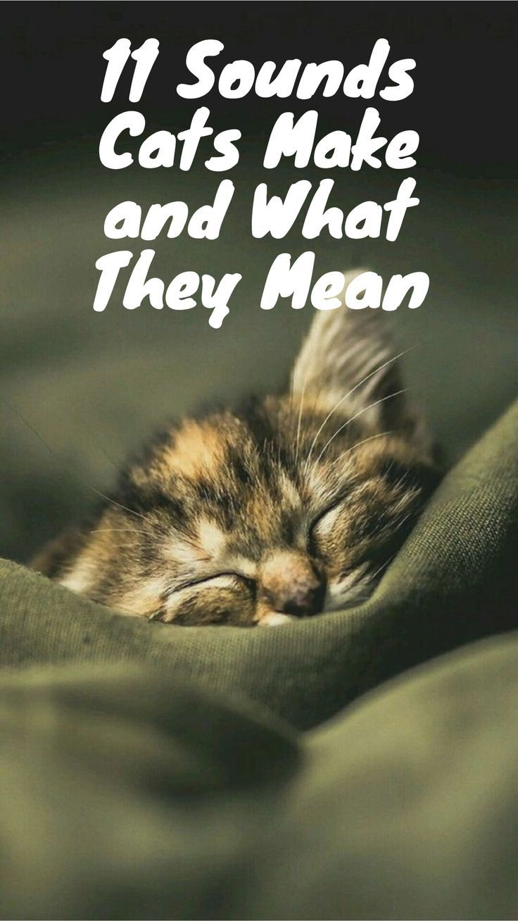 11 Sounds Cats Make And What They Mean Cat Noises Mean Cat Cats