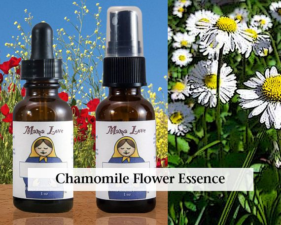 Chamomile Flower Essence 1 Or 2 Oz Dropper Or Spray Aura Mist For Releasing Tension Calming Upset Improving Sleep Flower Essences Lady Slipper Flower Essence