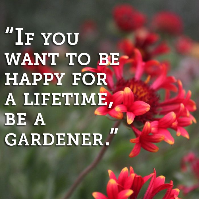"""Birthday Quotes From The Quote Garden: """"If You Want To Be Happy For A Lifetime, Be A Gardener"""