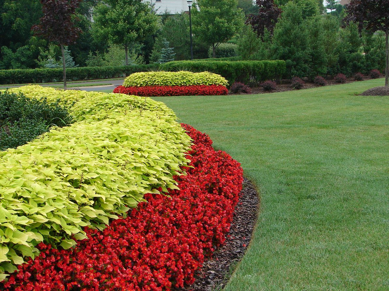 red begonia and yellow coleus