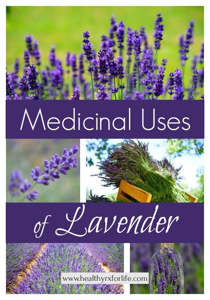 Medicinal Uses Of Lavender Herbalism Herbs Herbal Medicine